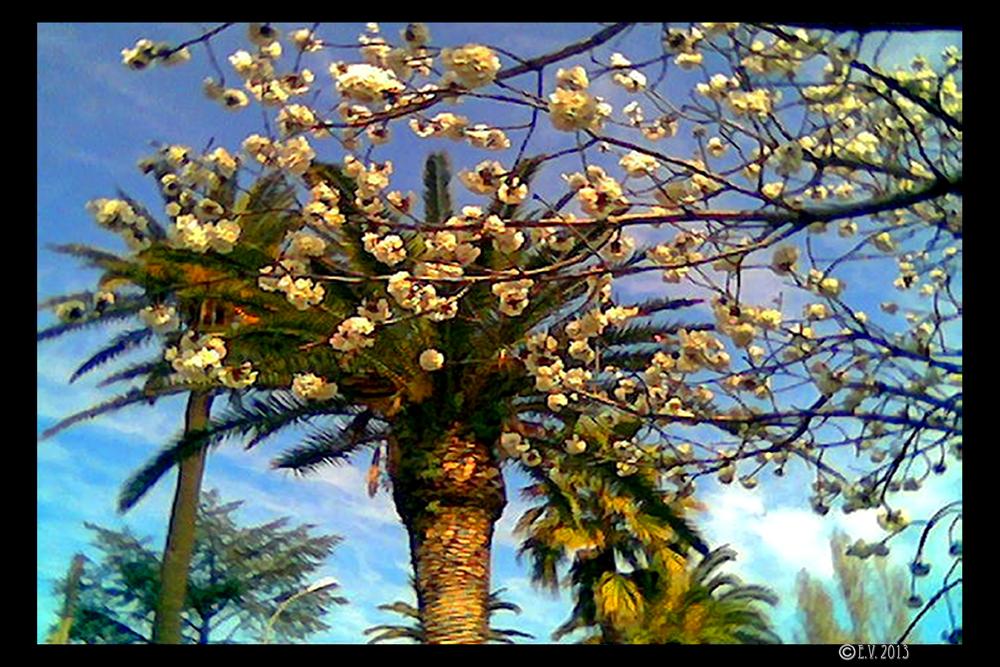 Le printemps à Hyères-Les-Palmiers